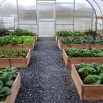 Boxes of Crops in Greenhouse